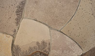 Tropical Porphyry